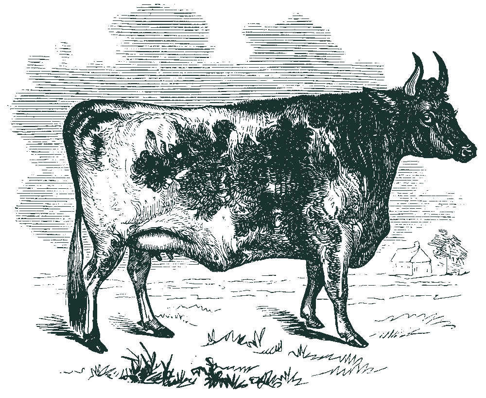 Illustration of a cow in a field